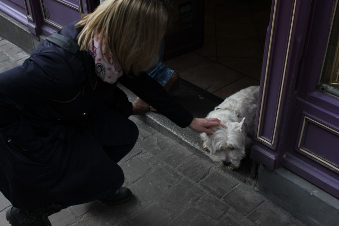 Walking Around Honfleur. Meeting The Locals