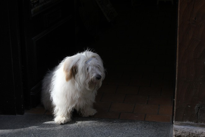 A dog at the shop entrance in the streets of Honfleur during our winter break